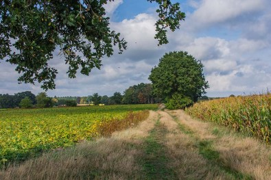 Himmlische Wege zwischen den Feldern in Dwergte