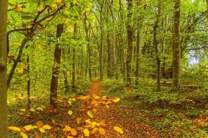 Herbstliche Waldwege