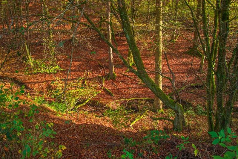 Hier lebt die Rote Waldameise