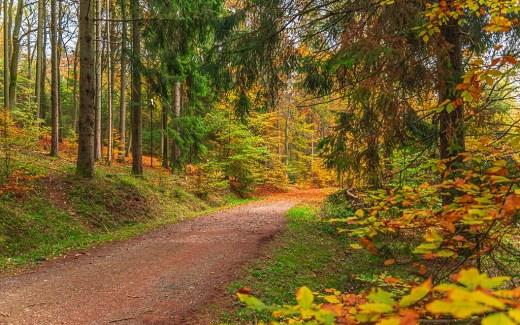 Traumschleifchen Wanderzeit -Herbst im Saarland