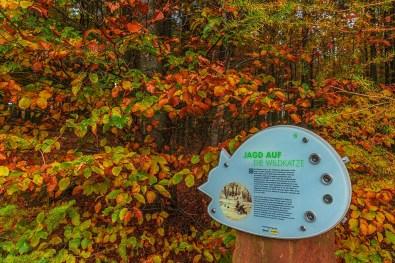 Traumschleifchen Wildkatzenpfad (94)