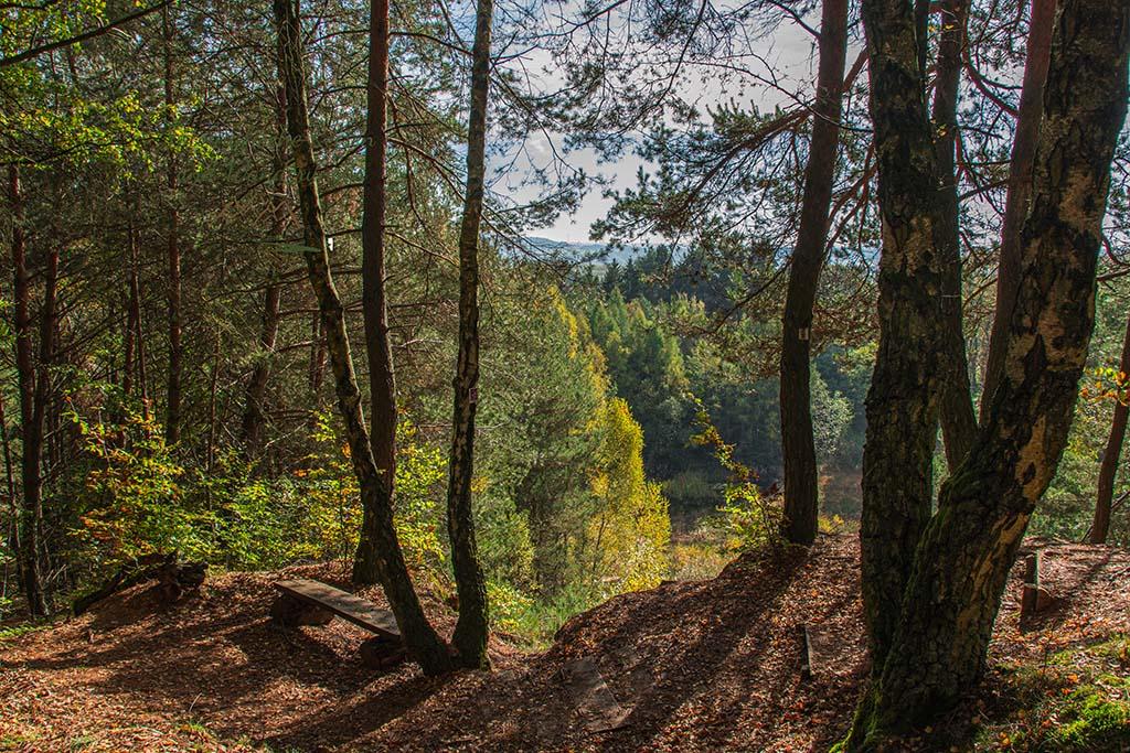 Himmlischer Blick durch die Bäume- Herbststimmung