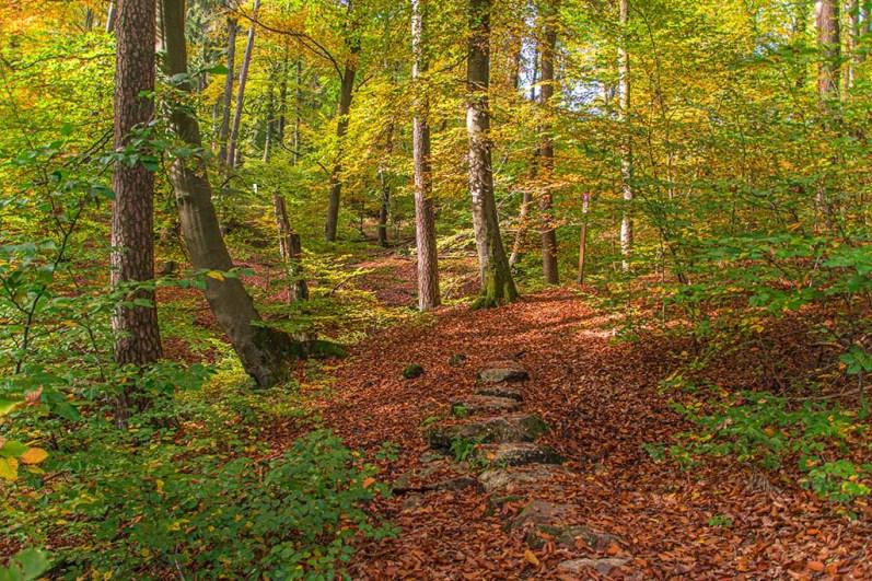 Über Trittsteine durch den Wald