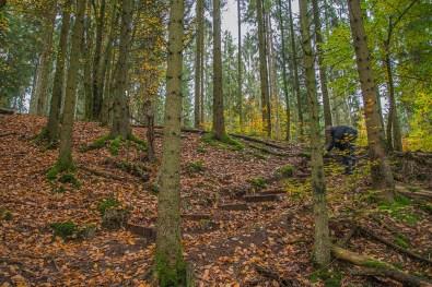 Stufen durch den Wald