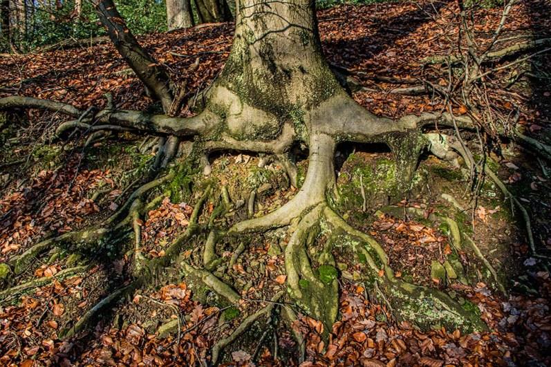 Wurzeln eines Baumes