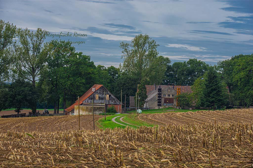 Stoppelfelder von Mais mit Haus im Hintergrund