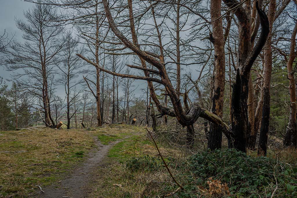 'Altusknipp Mechernich - EifelSchleifen und Hochwildpark Rheinland