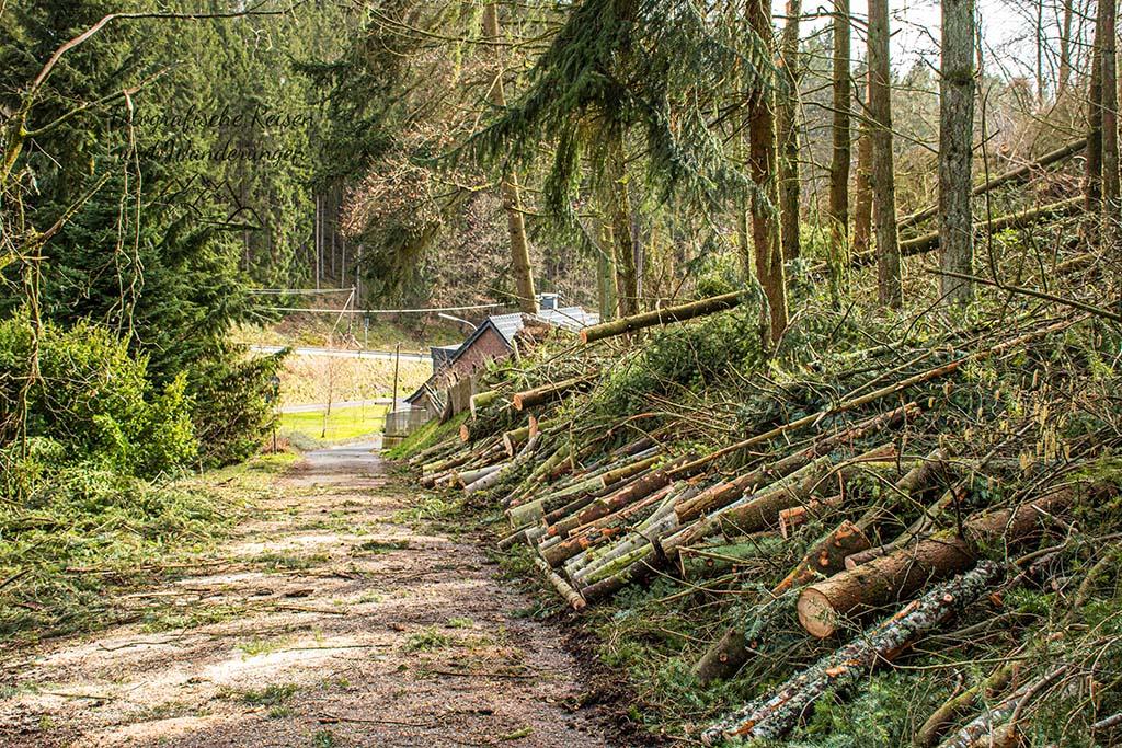 EifelSchleife Adlerblick