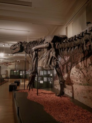 Das Zoologische Forschungsmuseum Alexander Koenig- GROSS, GRÖSSER, DINOSAURIER