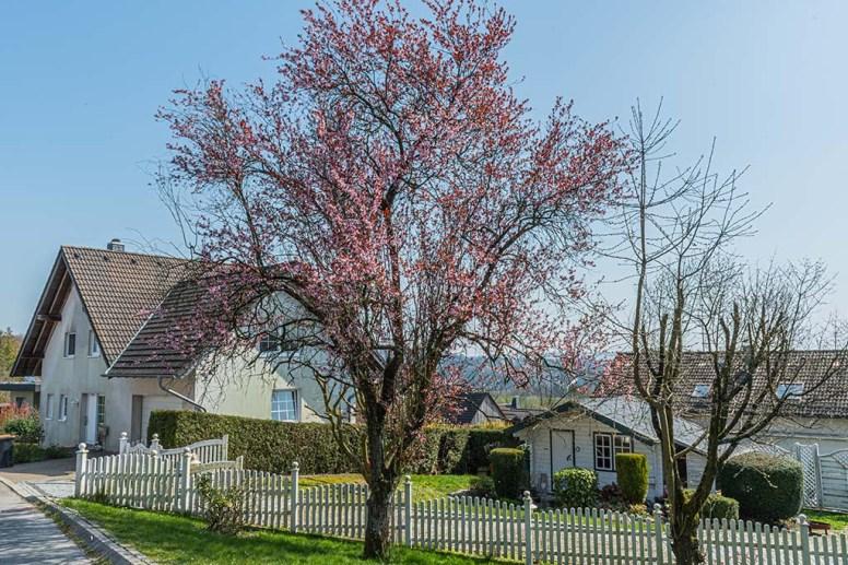Engeldorf - Alte Wege im Bergischen Land