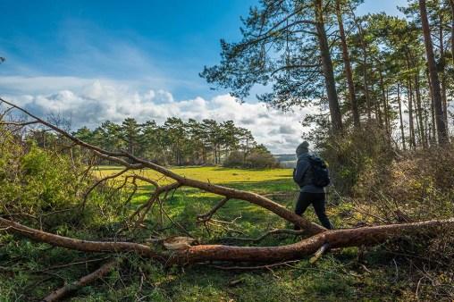 Wacholderhänge und Trockenrasen