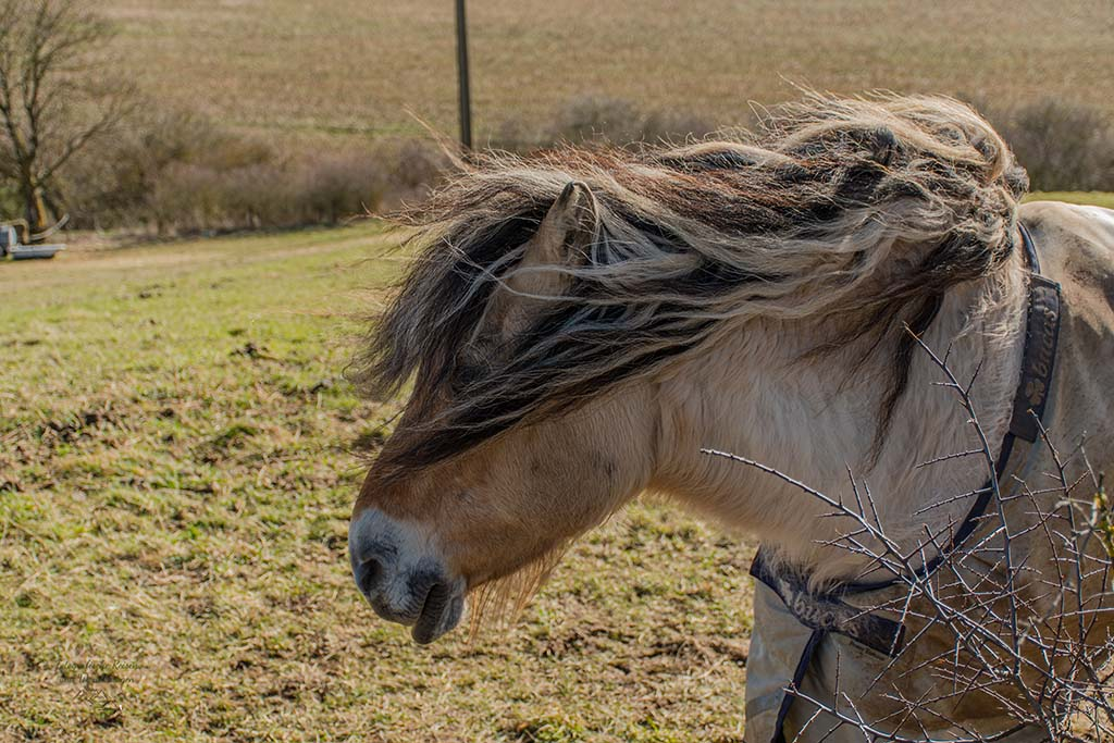 Pferd mit Sturmfrisur
