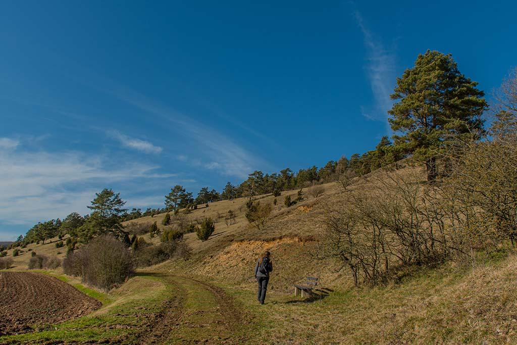 Trockenrasenflächen am Halsberg