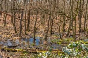 Viel Wasser in den Wäldern