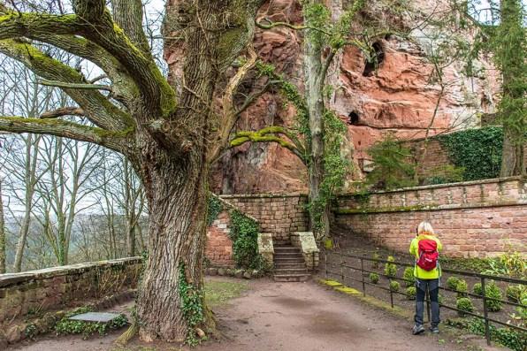 Blick zurück auf Burg Bergwartstein