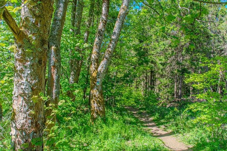 Grüner Waldeingang
