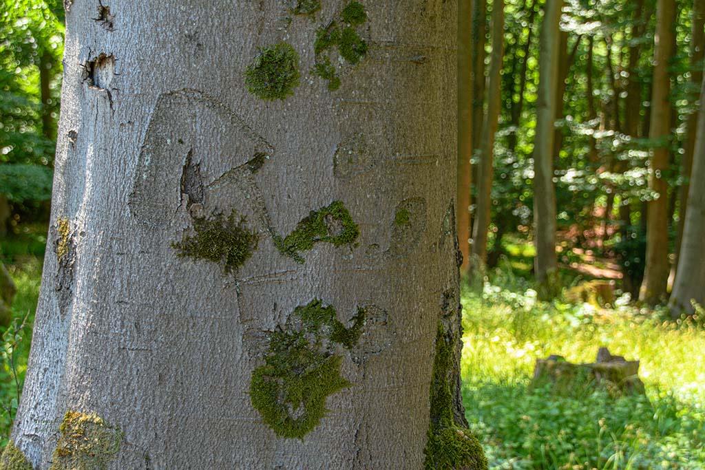 Rund um den Minderberg - Zauberwald