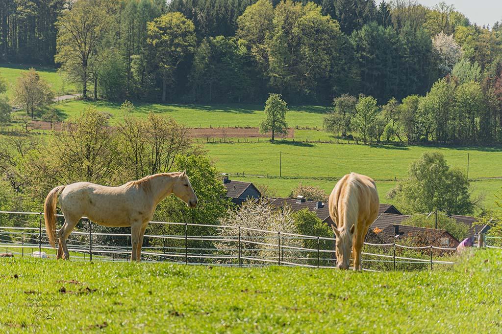Pferdeweiden