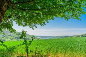 An der Ahr unterwegs - Felder an der Landskrone
