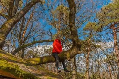 Sitzbaum am Hambacher Bergstein