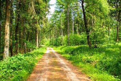 Lange geht es im Wald geradeaus