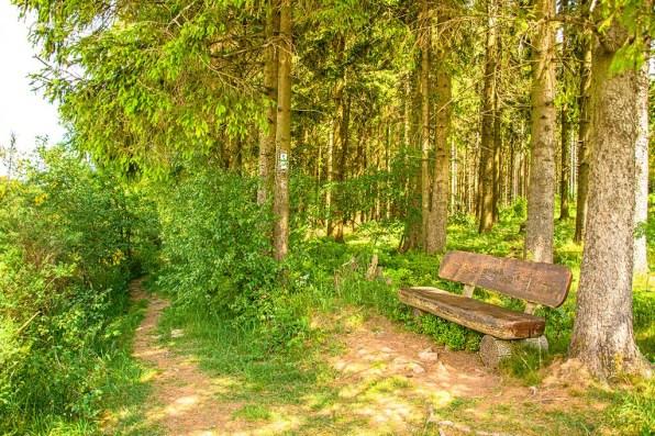 Lauschiger Rastplatz im Wald