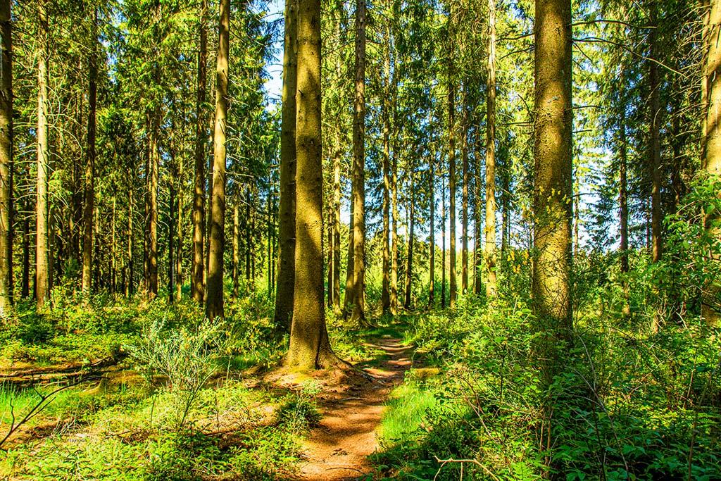 Himmlische Waldpfade