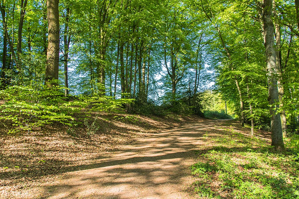 Wandern in Much - Waldweg