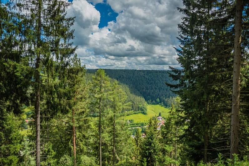 Baiersbronner Sankenbachsteig- Schwarzwälder Genießerpfad (199)