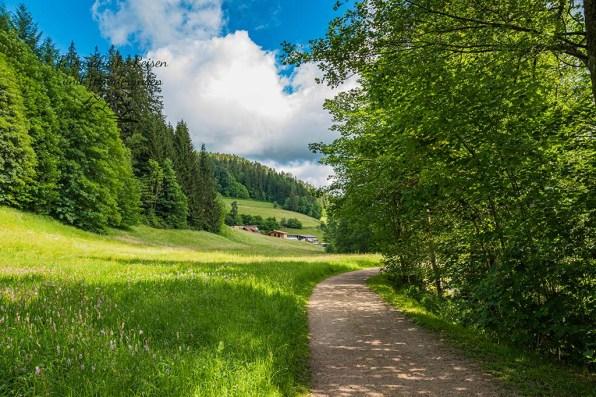 Idyllische Wege auf dem Genießerpfad Sankenbachsteig