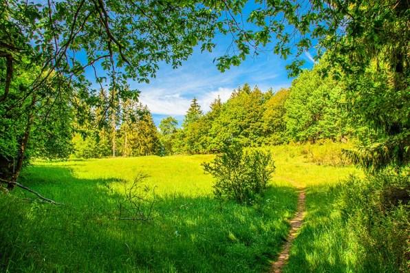 Schmale Wiesenwege