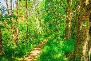 Saftiges Grün im Wald - EifelSpur Pingenwanderweg