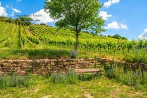 Trockenmauer im Weinberg