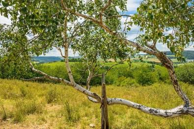 An Birken und Heideflächen