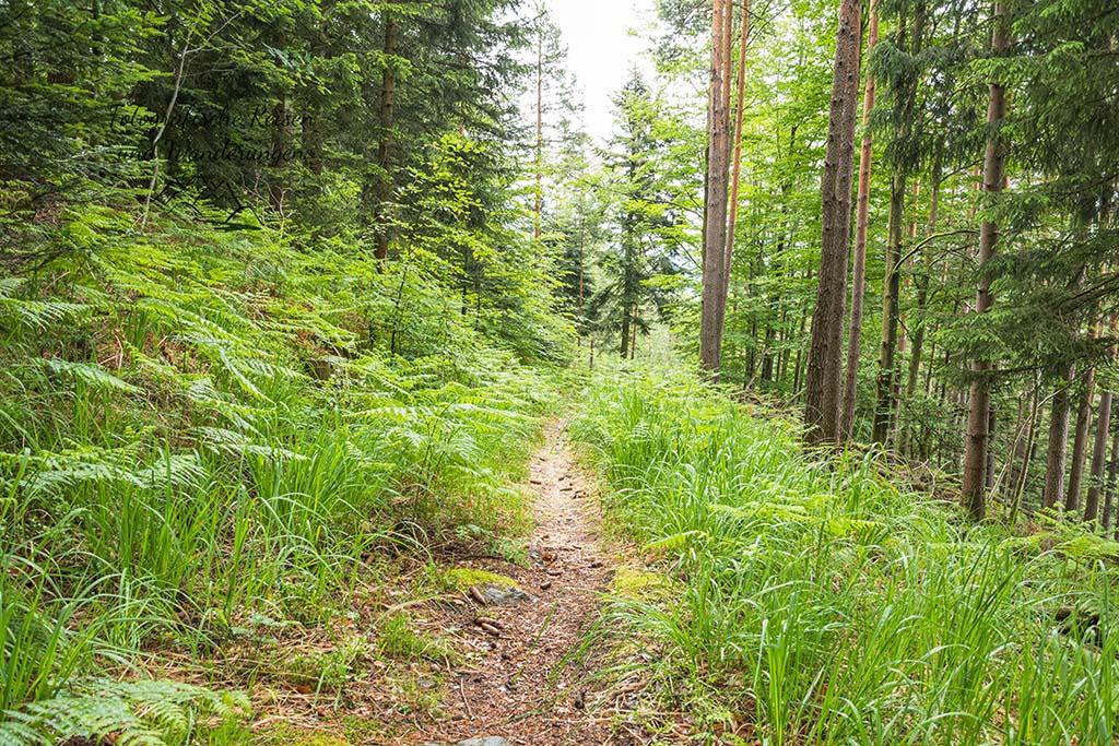 Hohe Gräser im Schwarzwald
