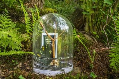 Glück im Sinneswald 2020
