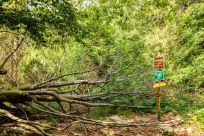 Totholz und ein Gipfelkreuz