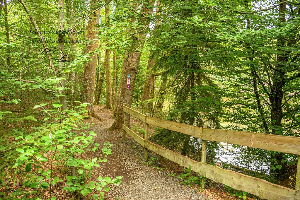 Traumschleife Dollbergschleife - Weg am Teich