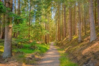 Blick zurück auf einen wunderschönen Wanderweg