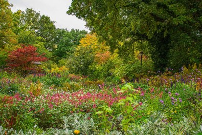 Bunte Blumen im Herbst