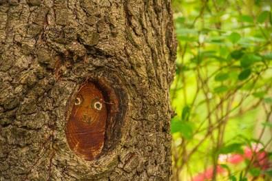 Besicht im Baum