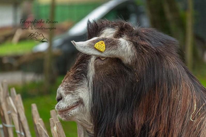 Eifel Zoo