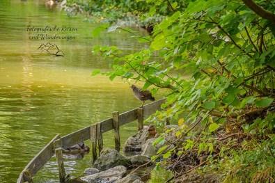 Wasservogel im Ludwig-Rehbock Park