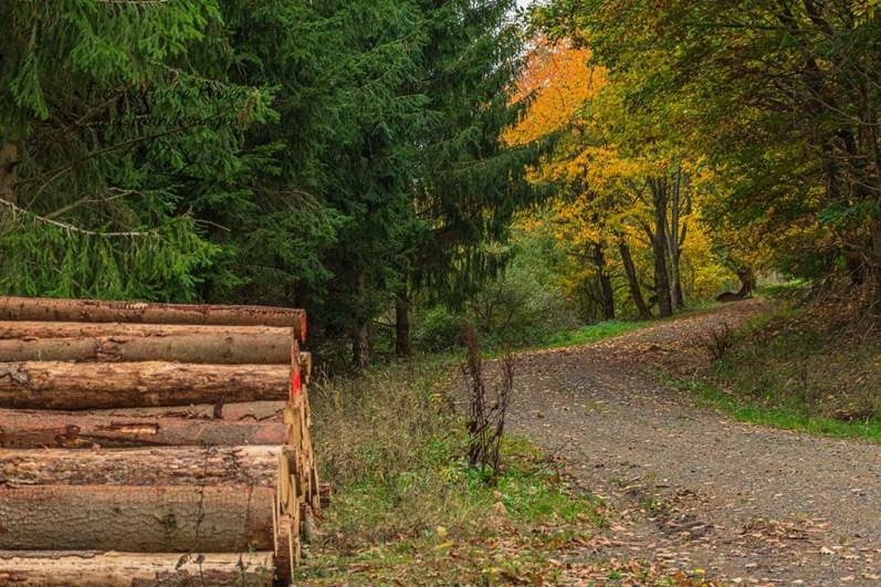 Holz (nicht) vor der Hütte