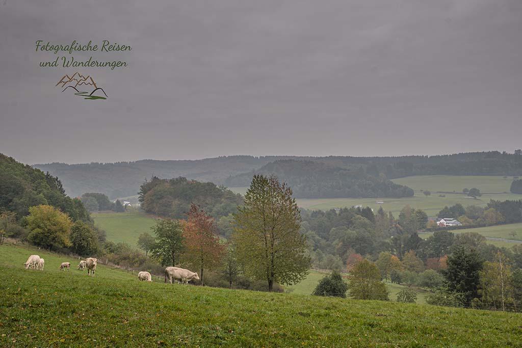Schafe, Rinder und Pferde in der Eifel