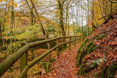 Herbst auf dem Hexenweg