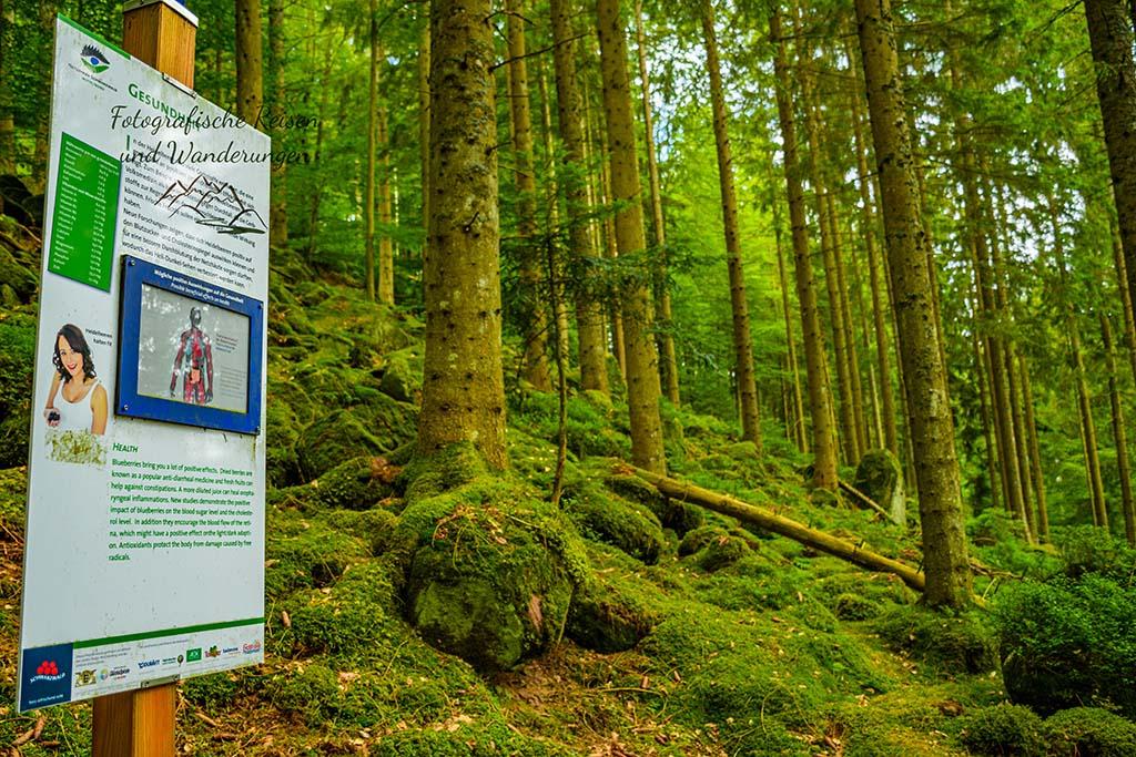 Genießerpfad Heidelbeerweg Enzklösterle