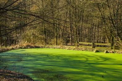 Grüner See an Maria in der Aue