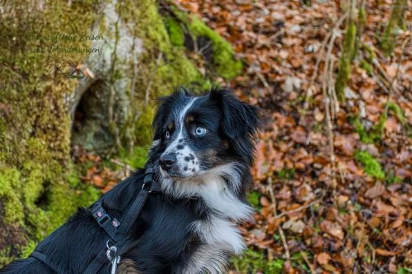 Hundetraining auf alten Wegen