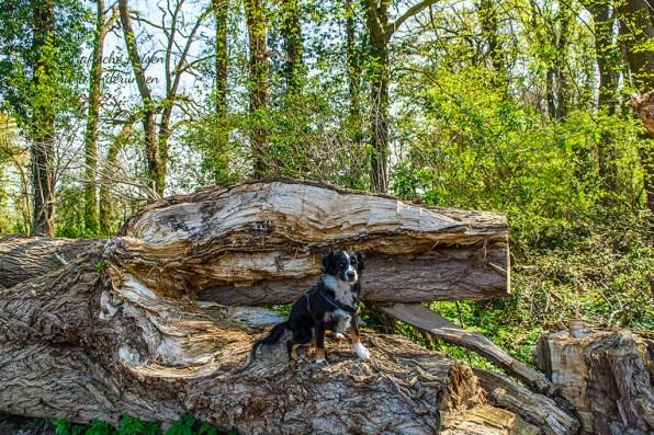 Jana auf Baumstamm